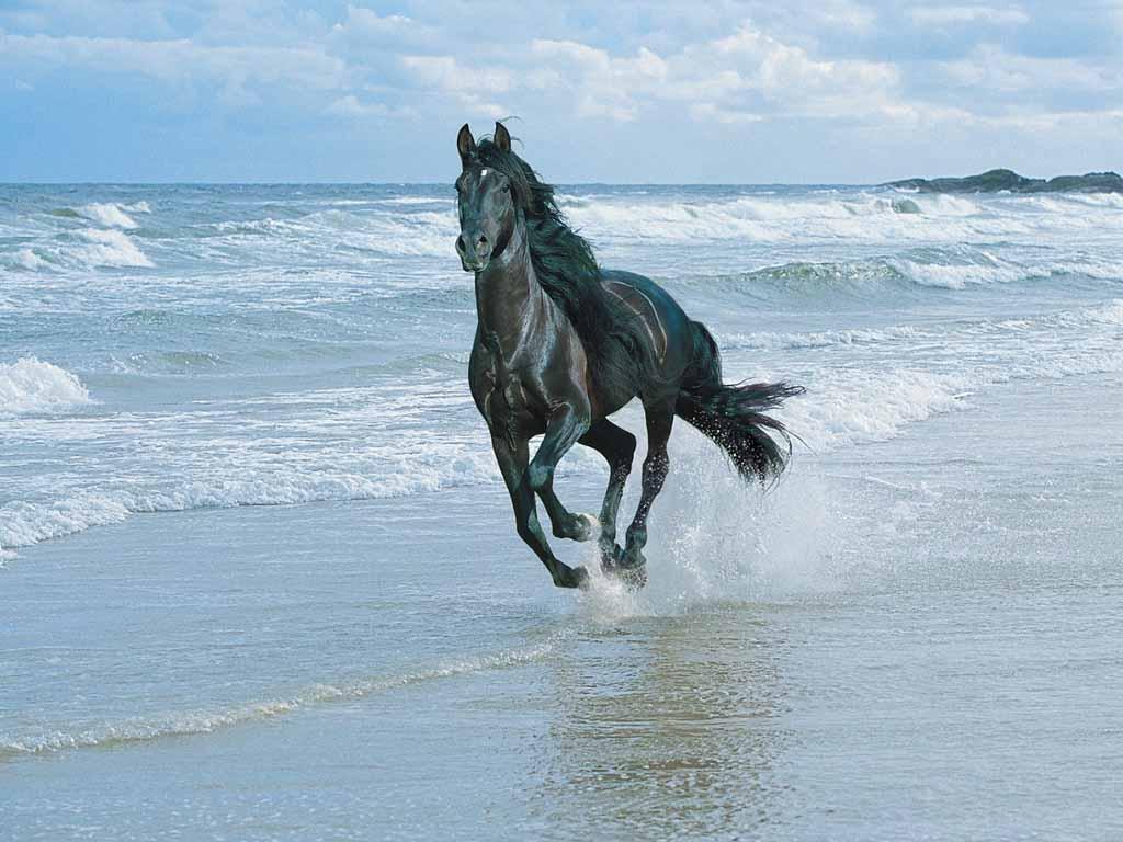 horse-beach